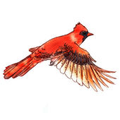 Cardinal bird watercolor-style vector illustration. — Stock Vector