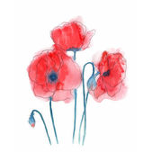 Watercolor style vector illustration of Poppies. — Stock Vector
