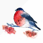 Watercolor-style vector illustration of Bullfinch bird — Stock Vector