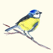 Watercolor-style vector illustration of Titmouse — Stock Vector