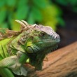Stock Photo: Green reptile