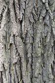 Bark background — Stock Photo
