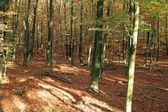 Herbstwald — Стоковое фото