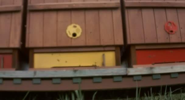 Vol d'abeilles — Vidéo