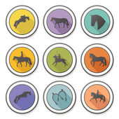 Set of four perfect equine badge — Stock Vector