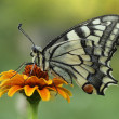 Butterfly sits on a flower — Stock Photo #38008921
