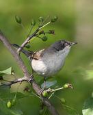 Bird. — Stock Photo