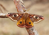 Butterfly sits on a branch — Stock Photo