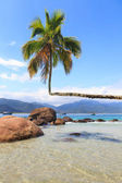 Palm tree on beach Aventueiro of island Ilha Grande — Zdjęcie stockowe