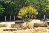 Cemetery on island Ilha Grande, Brazil — Stockfoto