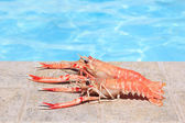Two lobsters near swimming pool — Stock Photo