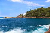 Wody niebieski niebo palm rosnących wyspy ilha grande — Zdjęcie stockowe