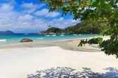 Beach Aventueiro blue water sky palm tree  — Stockfoto