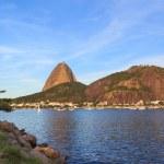 Mountain Sugarloaf tree Guanabara bay, Rio de Janeiro — Stock Photo #48826131