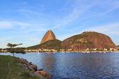 Mountain Sugarloaf tree Guanabara bay, Rio de Janeiro — Stock Photo
