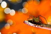 Beautiful spider on orange background — Стоковое фото