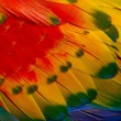 Stock Photo: Scarlet Macaw feathers