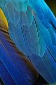 Feather — Stock Photo