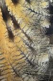 Eurasian Eagle Owl feathers — Stock Photo