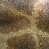 Piel de jirafa — Foto de Stock