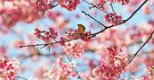 Oriental White-eye bird — Foto Stock