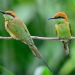 Little Green Bee-eater — Stock Photo #41680409