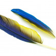 Blue and Gold Macaw feather — Stock Photo