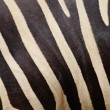 Stock Photo: Common Zebra