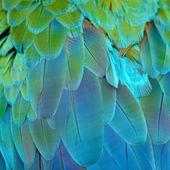 Harlequin Macaw feathers — Stockfoto