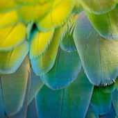 Harlequin Macaw feathers — Stock Photo
