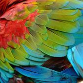 Greenwinged Macaw feathers — Stockfoto