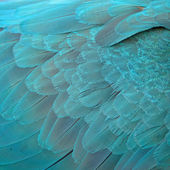 Blue and Gold Macaw feathers — ストック写真