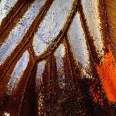 Ala de mariposa — Foto de Stock