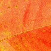 Leaf abstract — Stock Photo