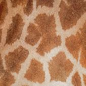 Giraffe skin — Stock Photo