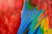 Scarlet Macaw feathers — Stock Photo