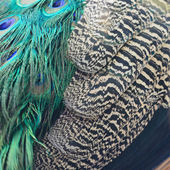 Green Peafowl feathers — Stock Photo