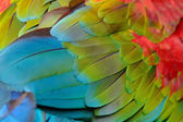 Greenwinged Macaw feathers — Foto de Stock