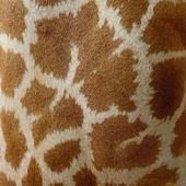 Giraffe-haut — Stockfoto