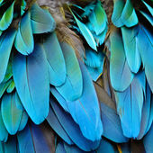 Harlequin Macaw feathers — Foto Stock