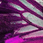 Kelebek kanadı — Stok fotoğraf