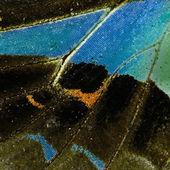 Skrzydła motyla — Zdjęcie stockowe