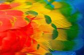 Scarlet Macaw feathers — Zdjęcie stockowe