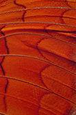蝴蝶翅膀 — 图库照片