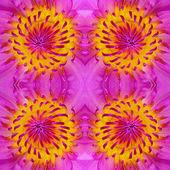 Waterlily pattern — Stock fotografie