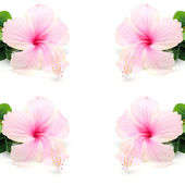 Hibiscus — Stock Photo