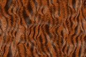 Zwierząt futerkowych — Zdjęcie stockowe
