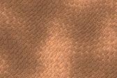 Gad skóry — Zdjęcie stockowe