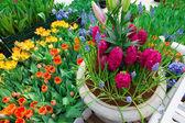 Flower garde — Stock Photo