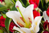 Bunch of Lily — Stock Photo